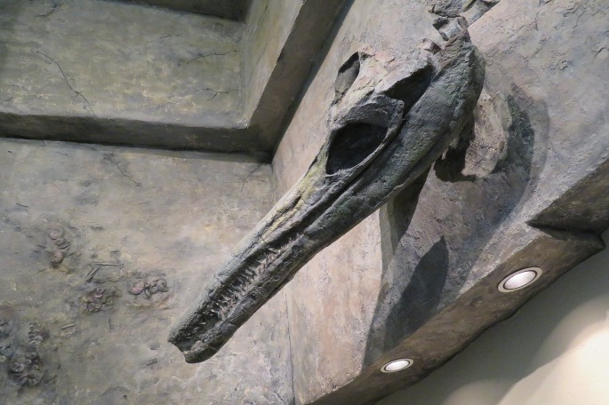 Icthyosaur Skull